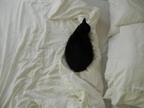 Cat _ 4000