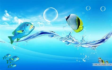 butterfly fish wallpaper  wallpapers