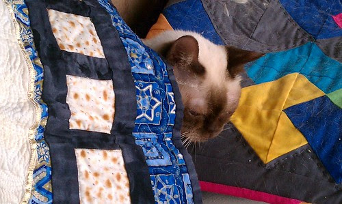 """Yep, that's my cat. She """"never"""" goes under a quilt... She's a topper. by aviva_hadas (Amy)"""