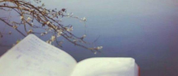 Le mani sul fiume: come nasce la video inchiesta da una zolletta di zucchero