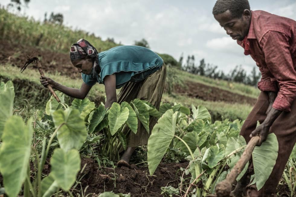 Agricultores trabajando la tierra en la comunidad de Hintala River, Etiopía.