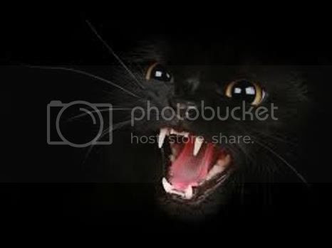 photo 02 Woman Blinded By Her CATs Licking_zpssqnfd3bp.jpg