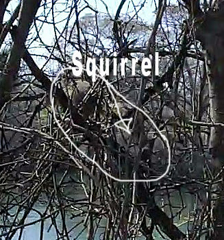 Squirrel-pic1