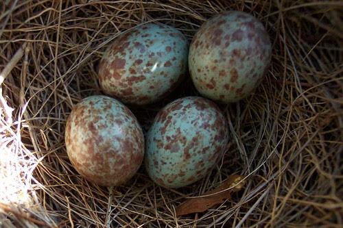 eggsupclose