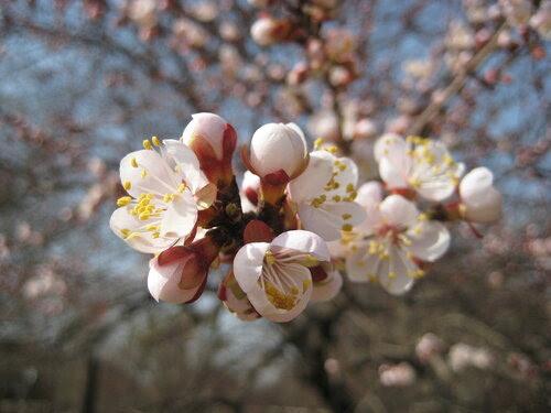 Весна в Астрахани!!!!!