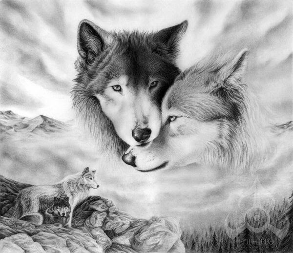 Fondos De Pantalla De Lobos Para Celular Fondos De Pantalla