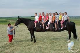 اكبر حصان في العالم