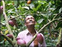 Plantation employee Napoleon da Vega with cocoa beans