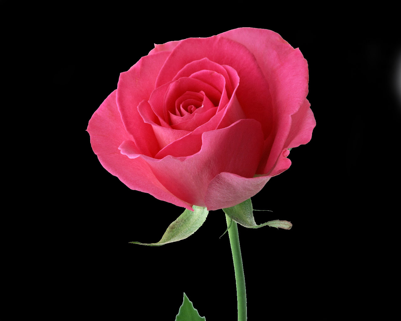 Beautiful Red Rose Flower Photo Wallpaper 1280x1024 22590