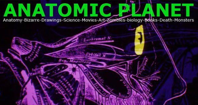Anatomic Planet