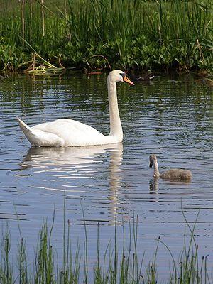 On Hatchet Pond.