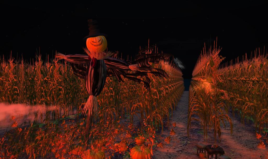 The Corn Field 3