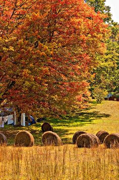 Hay field In the Fall