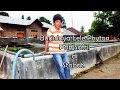 Budidaya Lele Phyton, Kota Stabat - Sumatera Utara