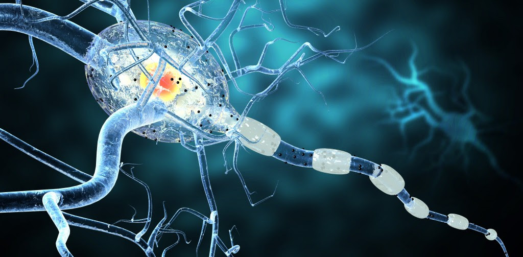 """<span class=""""entry-title"""">MS Active and Inactive Lesions Differ in Levels of Enzymes that Drive Glucose Metabolism</span><span class=""""entry-subtitle"""">Study of key enzymes in energy metabolism may help in understanding of axonal degeneration</span>"""