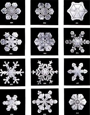 English: Snow flakes by Wilson Bentley. Bentle...