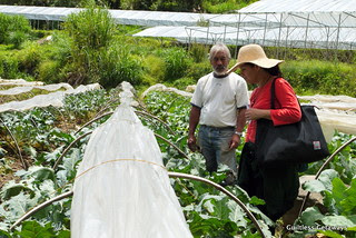 lily-of-the-valley-organic-farm-philippines.jpg