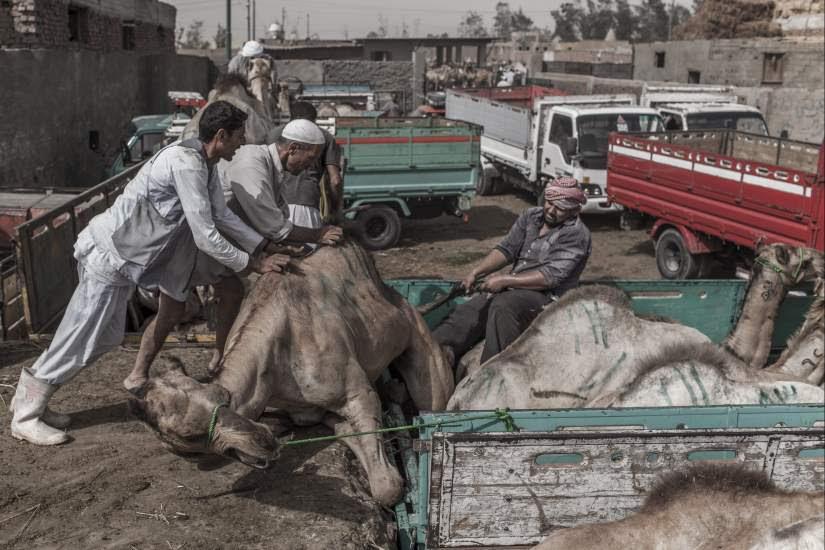 Mercado de camellos