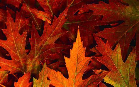 fall foliage wallpapers  desktop wallpaper cave