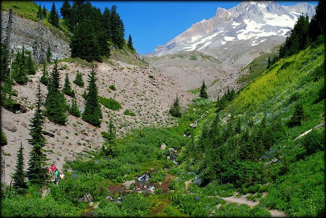 Paradise Park Loop trail - Mt. Hood