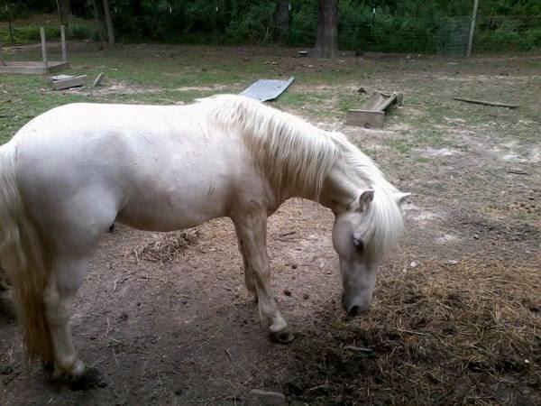 Craigslist Horses For Sale In Florida - Craigslis Jobs