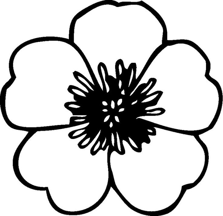 Flower Clipart Black And White Png