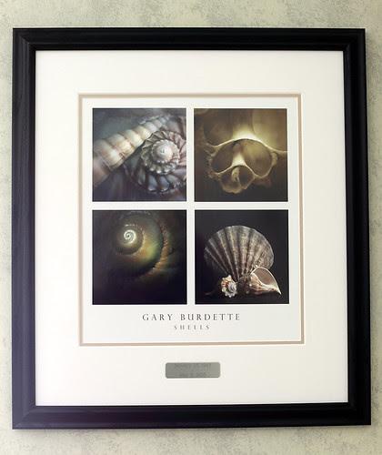 Shells by Megan Lorenz