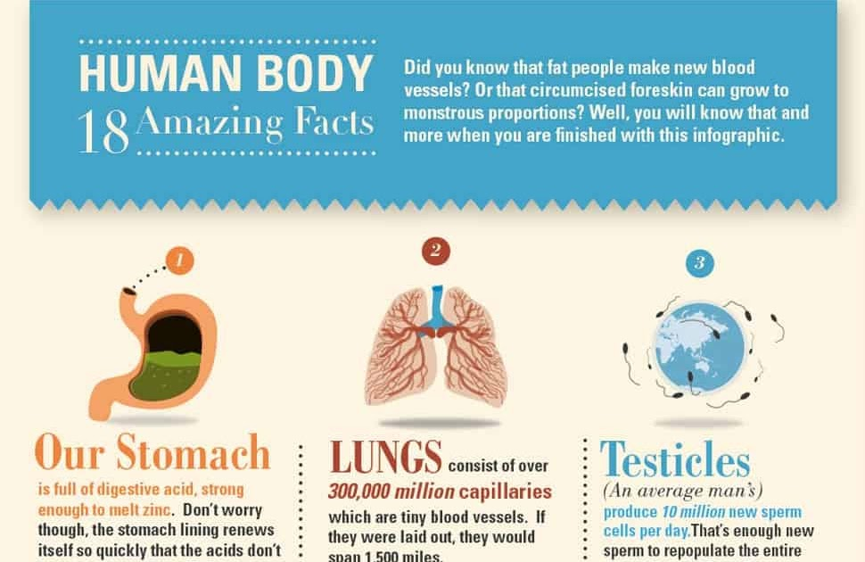 funny facts about humans Bones, the white tissue which makes the skeleton of human body has got some interesting facts checkout 10 interesting facts about bones that you must know.