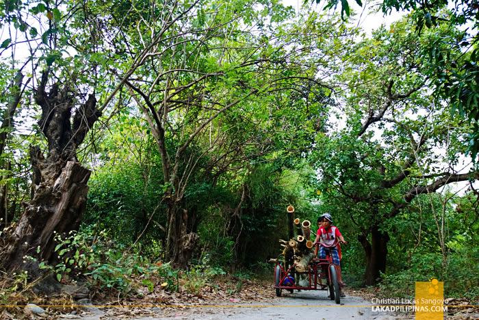 Kids Transporting Bamboos at Cabangan, Zambales