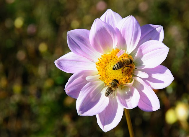 Bees and Their Importance