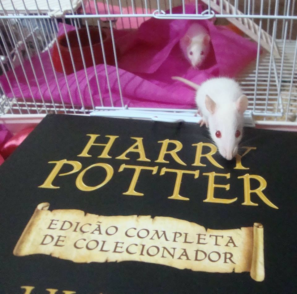 Barbie Potterhead... e Luna ao fundo!!!