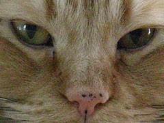 Jasper's keeping an eye on you
