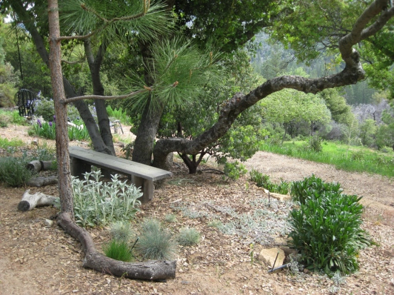 What To Plant Under Oaks And Pines In The Garden Sierra Foothill