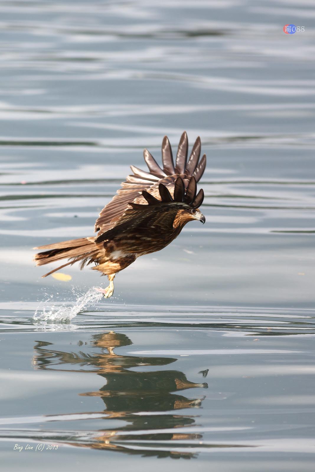 WATER_BING5278_LR