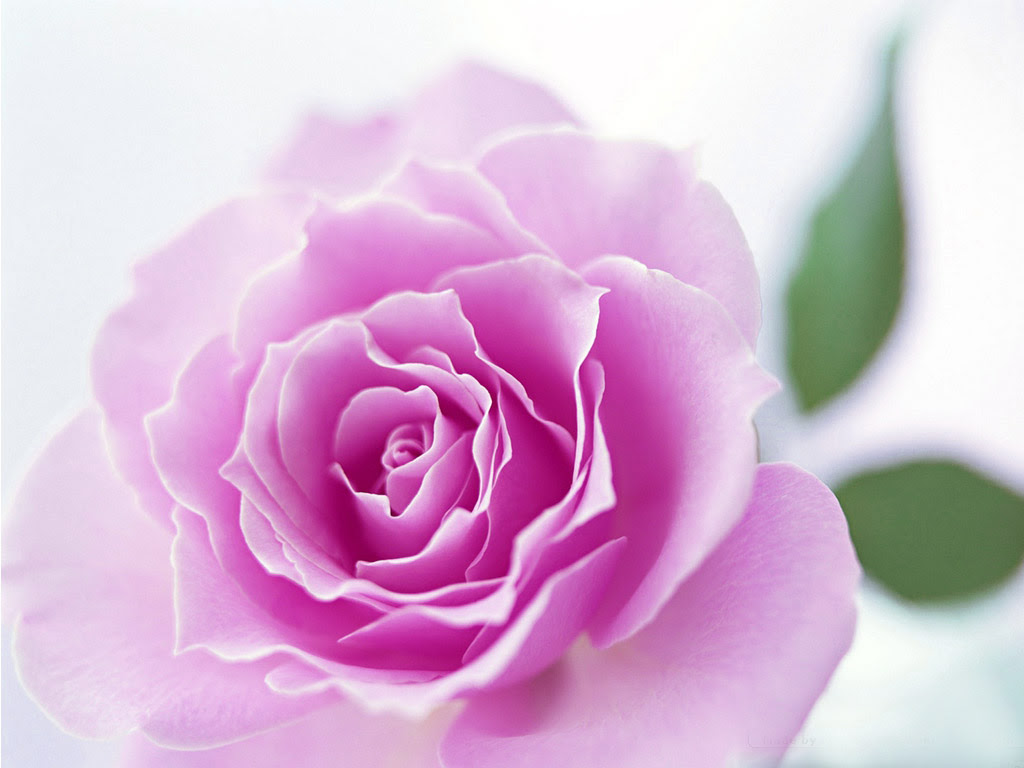 Top Cute Flowers Images Download Top Collection Of Different Types