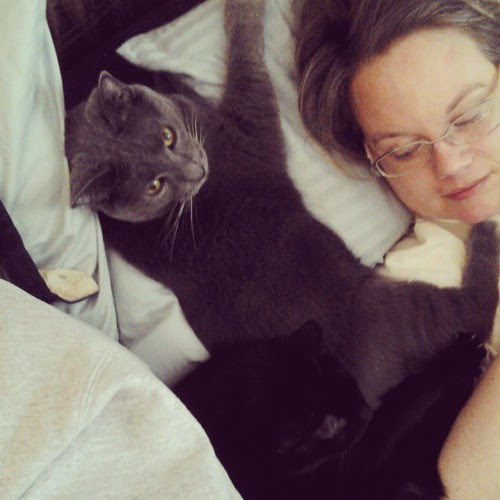 Cats and Wife. (And my left shoulder)