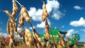 Disputa en Brasil por la soja Intacta