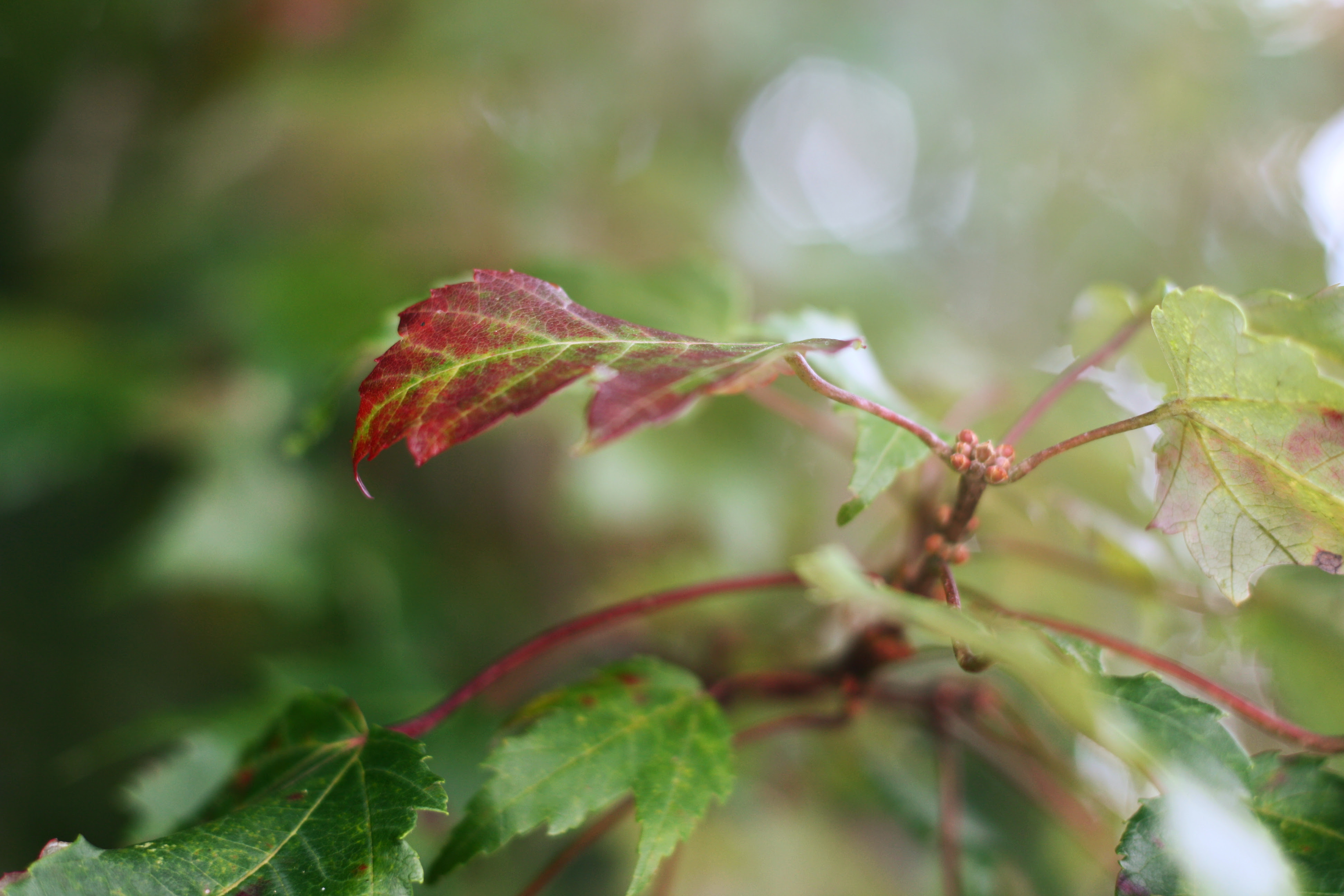 fall leaf haze