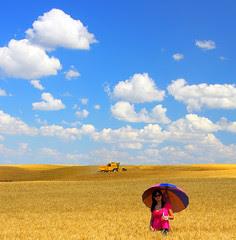 Beleza do trigo