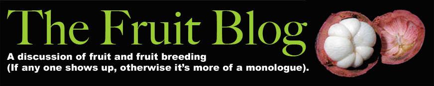 Fruit Blog Header.jpg