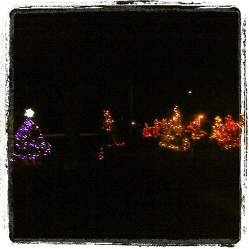 Christmas trees in OP