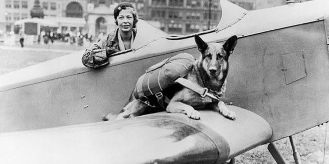 perros-paracaidistas