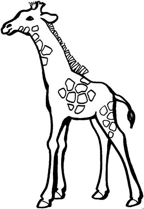 gratis malvorlagen giraffe  kostenlose malvorlagen ideen