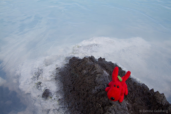 Rover, posing on a rock in the Blue Lagoon