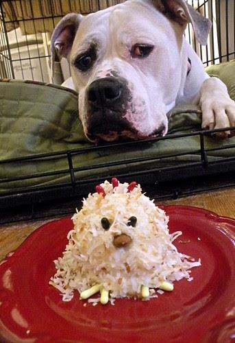 Dog Cupcake Lovin Layla