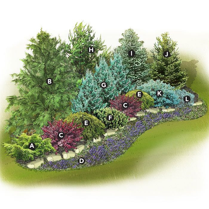 Evergreen Landscaping Ideas for Zone 6