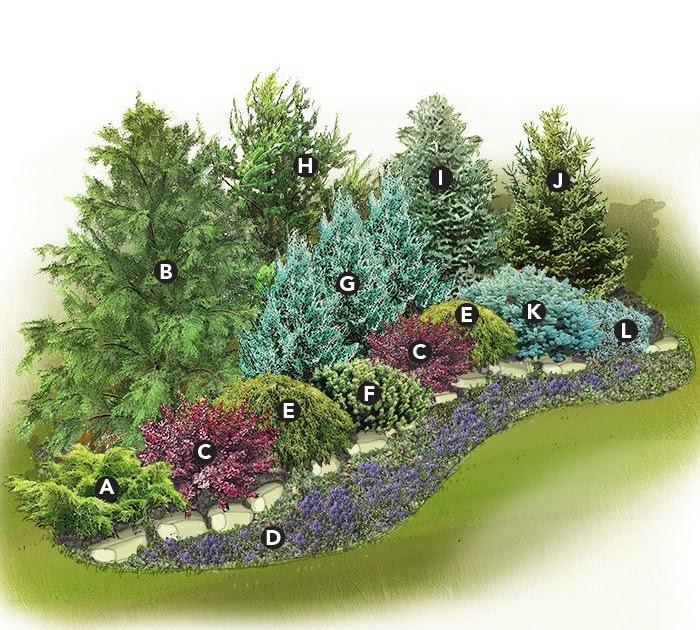 Learn Evergreen Landscaping Ideas Zone 6