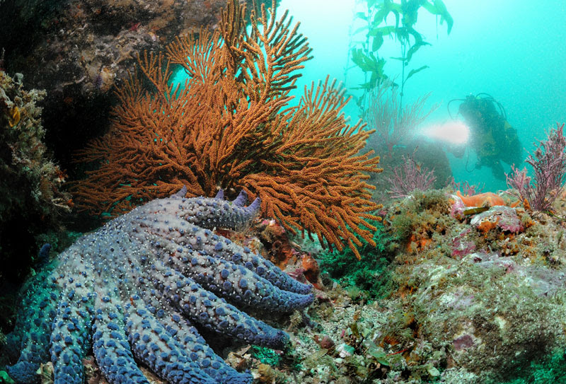 Diving The Northern Channel Islands The Galapagos Of