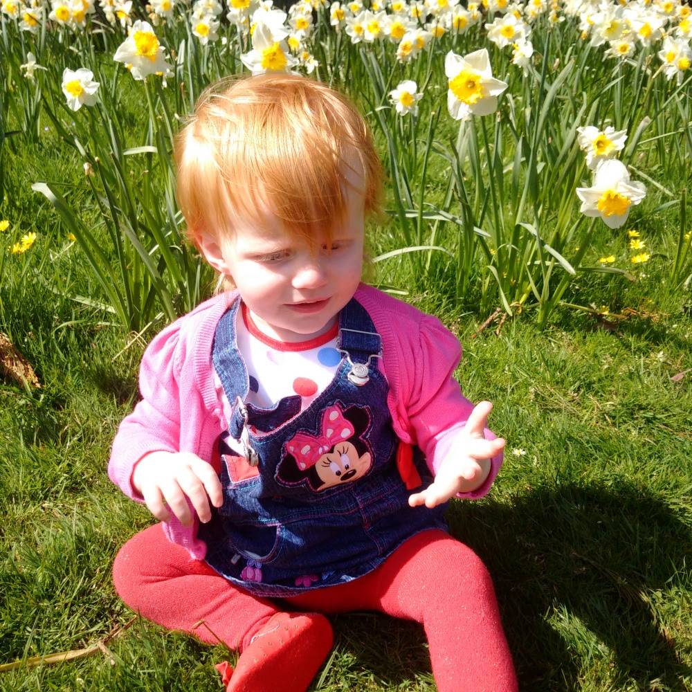 Daffodils at Tredegar Park
