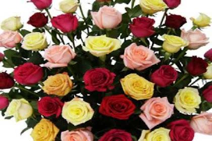 Ramos De Flores De Cumpleanos Para Mi Amiga